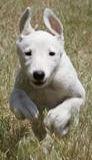 ARRF Doggie Olympics